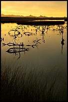 Marsh at sunrise, Havasu National Wildlife Refuge. Nevada, USA (color)
