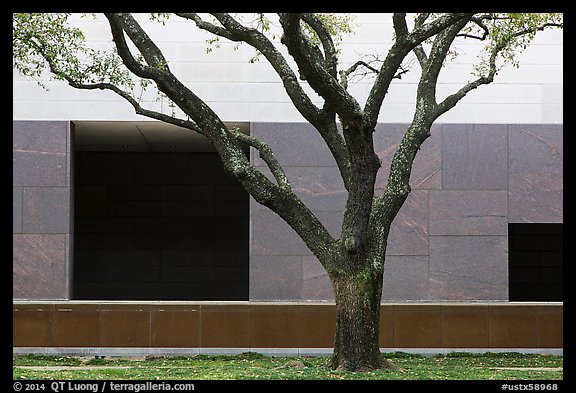 Tree and wall, Museum of Fine Arts. Houston, Texas, USA (color)