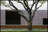 Tree and wall, Museum of Fine Arts. Houston, Texas, USA ( color)