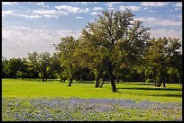 Grass, bluebonnets and trees. Texas, USA ( color)