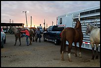 Trailers and horses. Fort Worth, Texas, USA ( color)