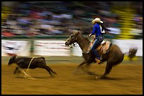 Individual roping, Stokyards Championship Rodeo. Fort Worth, Texas, USA ( color)