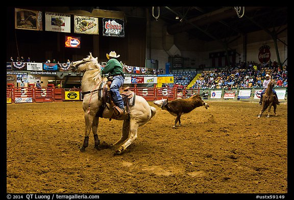 Team finishing roping, Stokyards Rodeo. Fort Worth, Texas, USA (color)