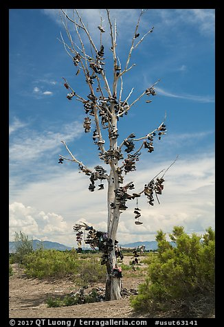 Shoe tree, Highway 50. Nevada, USA (color)