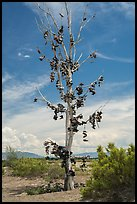 Shoe tree, Highway 50. Nevada, USA ( color)