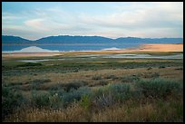 Sagebrush and mountains reflected in Great Salt Lake. Utah, USA ( color)