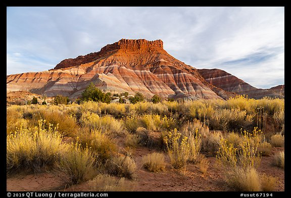 Shrubs and butte, Old Pahrea. Grand Staircase Escalante National Monument, Utah, USA (color)