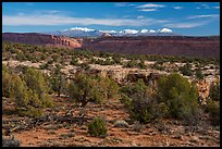 Cedar Mesa and snowy Abajo Mountains. Bears Ears National Monument, Utah, USA ( color)