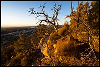 Cedar Mesa from Salvation Knoll, sunrise. Bears Ears National Monument, Utah, USA ( color)