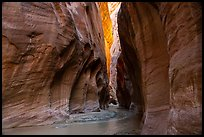Paria River flowing in glowing slot canyon. Vermilion Cliffs National Monument, Arizona, USA ( color)