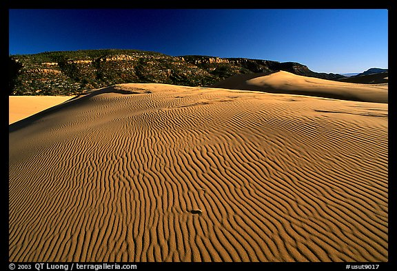 Rippled sand dune, late afternoon, Coral Pink Sand Dunes State Park. Utah, USA (color)