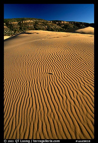 Ripples on sand dunes, late afternoon, Coral Pink Sand Dunes State Park. Utah, USA (color)