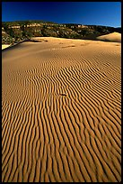 Ripples on sand dunes, late afternoon, Coral Pink Sand Dunes State Park. Utah, USA