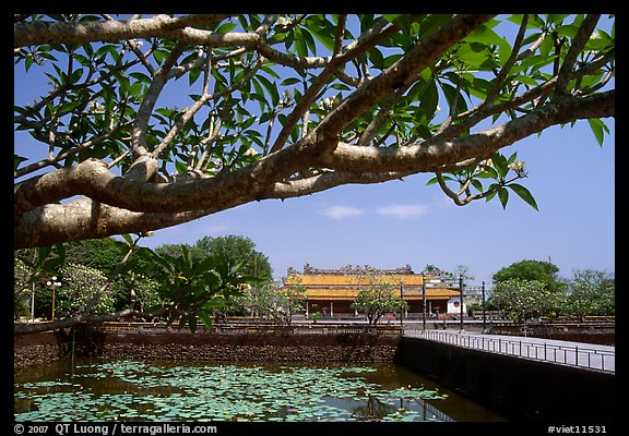 Plumeria tree, lotus pond, Thai Hoa palace (palace of supreme peace), citadel. Hue, Vietnam (color)