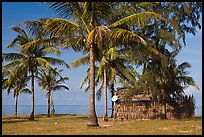 Palm trees, hut with satellite dish. Phu Quoc Island, Vietnam (color)