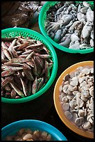 Close-up of seafood for sale in baskets, Duong Dong. Phu Quoc Island, Vietnam ( color)