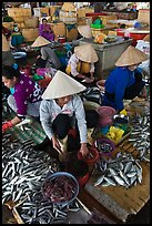 Women selling fish at market, Duong Dong. Phu Quoc Island, Vietnam (color)