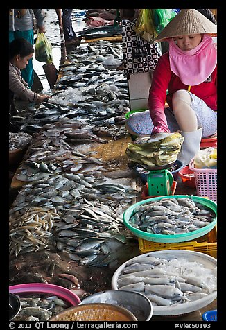 Fish for sale at public market, Duong Dong. Phu Quoc Island, Vietnam (color)