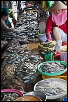 Fish for sale at public market, Duong Dong. Phu Quoc Island, Vietnam ( color)