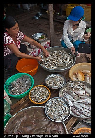 Customer purchasing fish at market, Duong Dong. Phu Quoc Island, Vietnam (color)