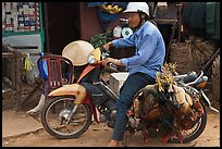 Moterbike rider carrying chickens, Duong Dong. Phu Quoc Island, Vietnam (color)