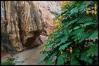 Flowers and rock walls, Fairy Stream. Mui Ne, Vietnam (color)