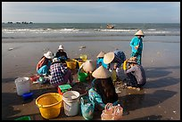 Women on beach sorting fresh catch. Mui Ne, Vietnam (color)