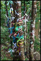 Multicolored ribbons on tree trunks. Ta Cu Mountain, Vietnam ( color)