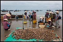 Freshly harvested shells on beach with backdrop of fishing boats. Mui Ne, Vietnam (color)