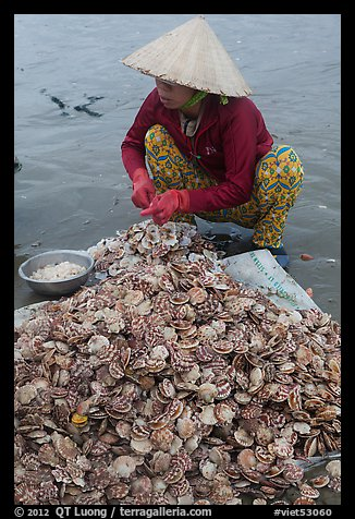 Woman opening scallops. Mui Ne, Vietnam (color)