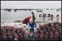 Shells packed for sale on beach, Lang Chai. Mui Ne, Vietnam (color)