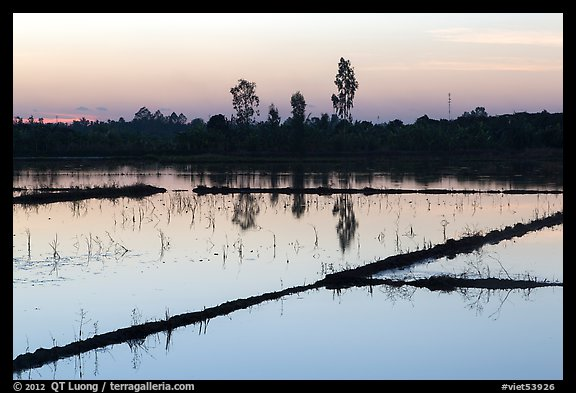 Flooded rice fields at sunset. Mekong Delta, Vietnam (color)