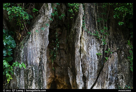 Limestone wall and vegetation. Da Nang, Vietnam (color)
