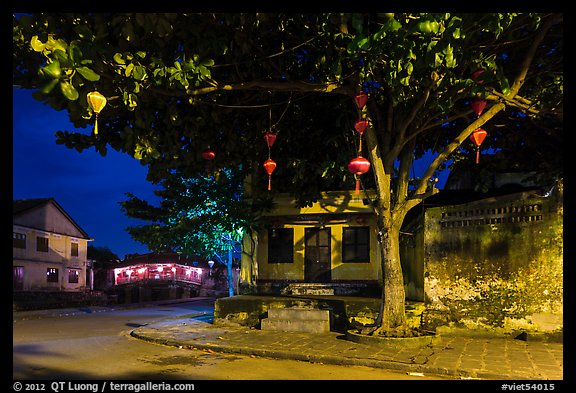 Tree with paper lanterns in Japanese Bridge area at night. Hoi An, Vietnam (color)