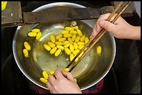 Hands handling silkworm cocoons with chopsticks. Hoi An, Vietnam (color)