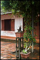 Bonsai trees and monastic buildings, Thien Mu pagoda. Hue, Vietnam ( color)