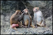 Three monkeys. Halong Bay, Vietnam ( color)