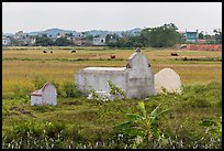 Tombs set amongst field. Vietnam ( color)