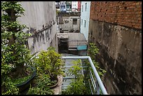 Potted plants on balcony garden. Ho Chi Minh City, Vietnam (color)