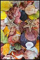 Close-up of colorful sea shells. Mui Ne, Vietnam ( color)