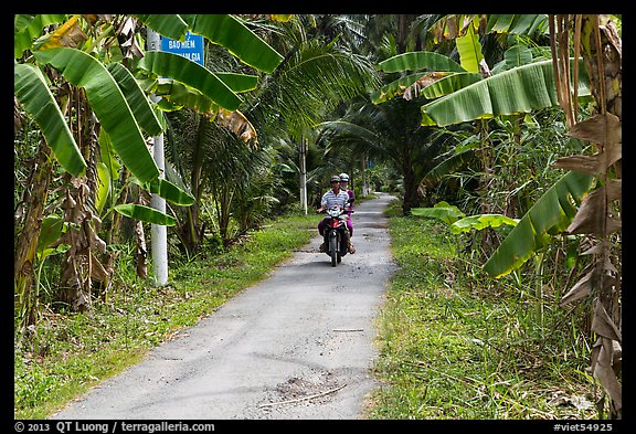 Narrow rural road bordered by banana trees. Ben Tre, Vietnam