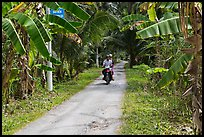 Narrow rural road bordered by banana trees. Ben Tre, Vietnam (color)