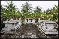 Tombs amidst grove of banana trees. Ben Tre, Vietnam ( color)