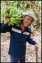 Man shouldering banana cluster. Ben Tre, Vietnam ( color)