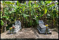 Tombs and banana trees. Ben Tre, Vietnam (color)