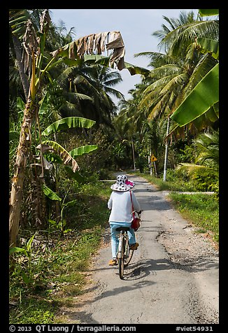 Bicyclist on rural road surrounded by banana and coconut trees. Ben Tre, Vietnam (color)