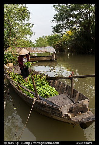 Woman unloading bananas from boat. Can Tho, Vietnam (color)