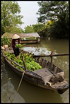Woman unloading bananas from boat. Can Tho, Vietnam ( color)