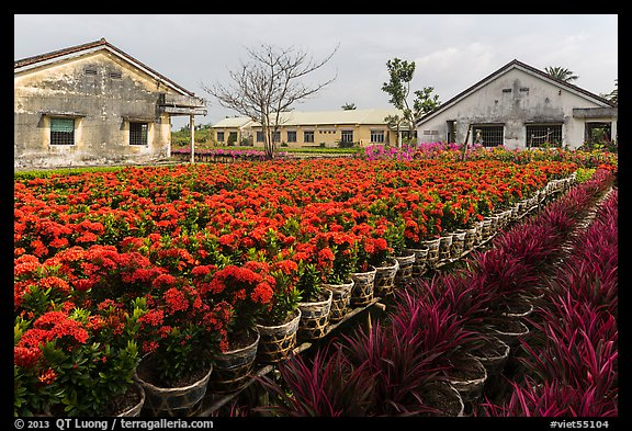 Flower nursery. Sa Dec, Vietnam (color)