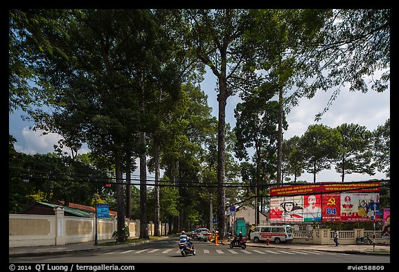 Tall trees on street through Tao Dan park. Ho Chi Minh City, Vietnam (color)